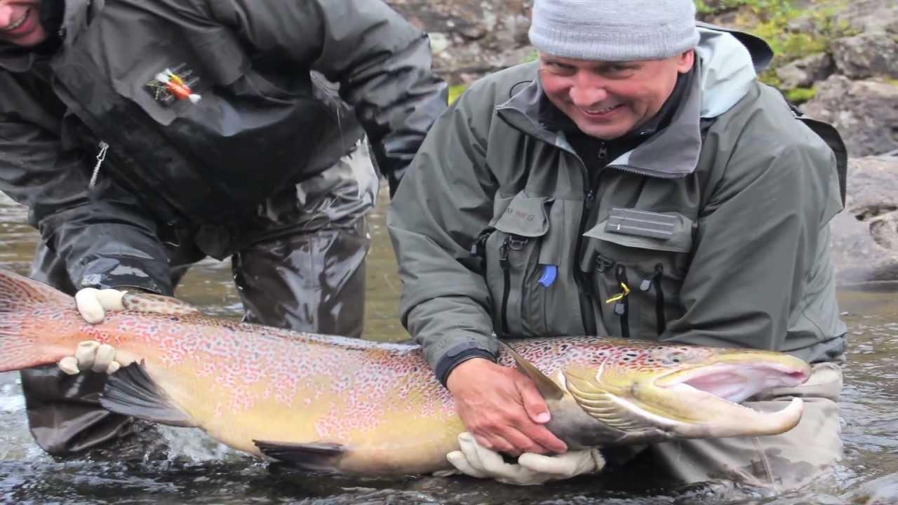 Monster-40-lb-Salmon-Three-Rivers-Kola-Peninsula