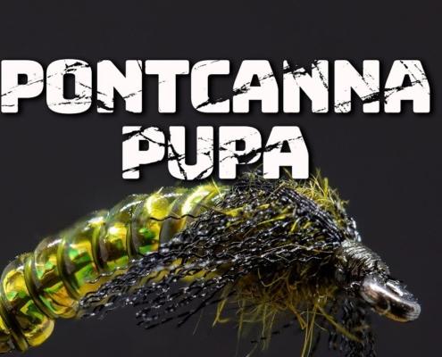 Pontcanna-Pupa