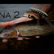 Rena-2