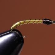 Simple-Midge-Larva