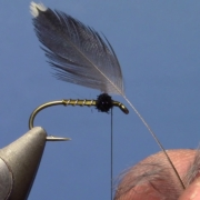 Starling-and-Olive-Soft-Hackle
