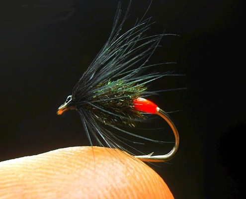 Tying-a-Black-amp-Peacock-Spider-with-Hot-Spot-by-Mak
