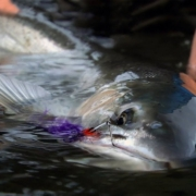 WINTER-RUN-by-Todd-Moen-Pacific-Northwest-Winter-Steelhead-Fly-Fishing