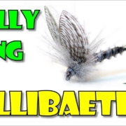 Wally-Wing-Callibaetis-by-Fly-Fish-Food