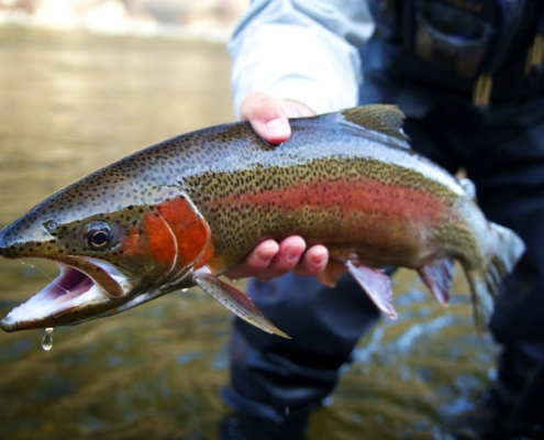 Why-Fly-Fish-Montana