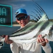 Baja-Buffet-Roosterfish-Fly-Fishing
