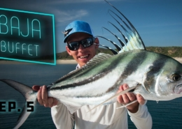 Baja-Buffet-Roosterfish-Fly-Fishing