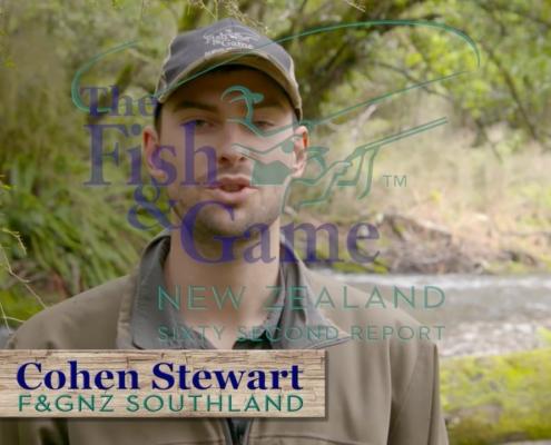 Fiordland-Mouse-Trout