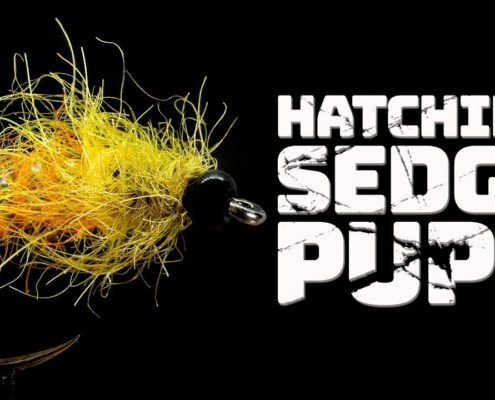 Hatching-Sedge-Pupa