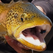 New-Zealand-Fly-Fishing-Traveltruly-Presents-Guides-Day-Off