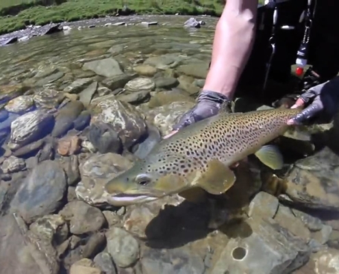 New-Zealand-Fly-Fishing-Traveltruly-Presents-High-Country-Browns