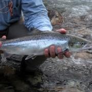 Salmon-Jive-Part-1