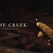 The-Creek