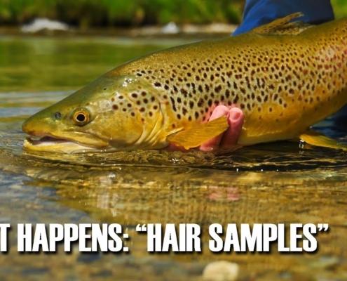 As-It-Happens-Hair-Samples