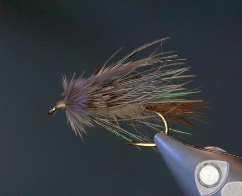 JAV-Sparrow