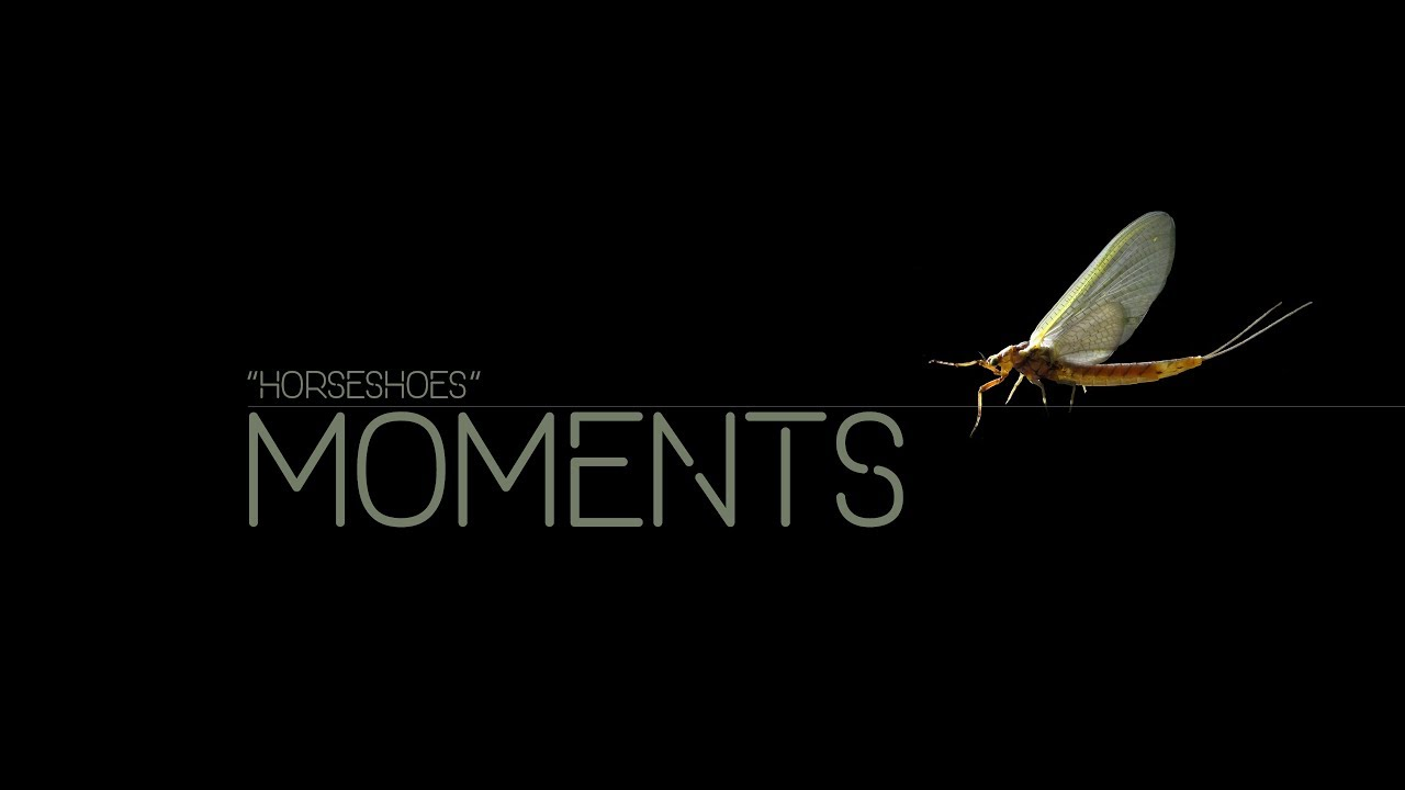 MOMENTS-02-Horseshoes