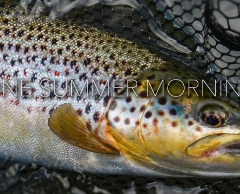 One-Summer-Morning
