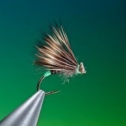 Tying-a-Female-Caddis-with-Barry-Ord-Clarke