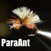 UV-Para-Ant