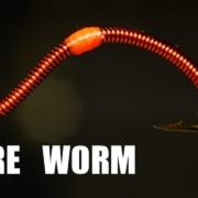 Wire-Worm