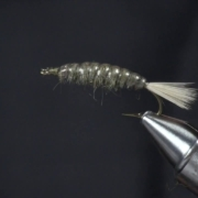 Crane-Fly-Larva