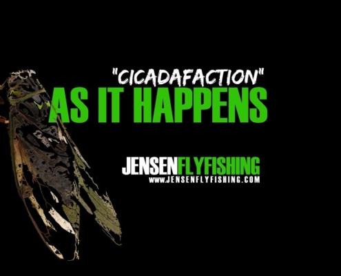 Cicadafaction