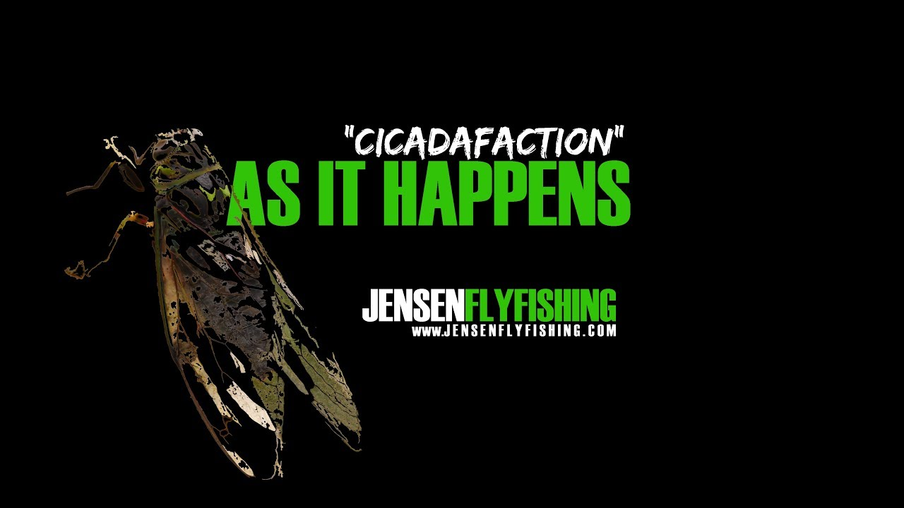 Cicadafaction