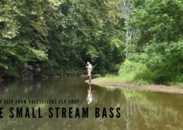 One-Small-Stream-Bass