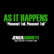 As-It-Happens-Pheasant-Tail-Pheasant-Tail