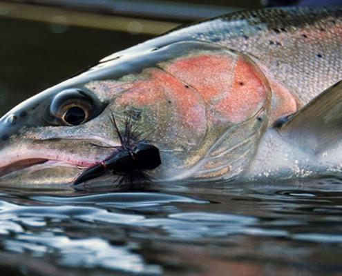 Desert-Dries-Steelhead-Fly-Fishing-by-Todd-Moen
