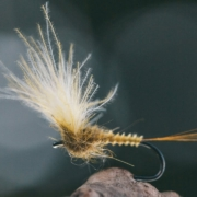 FLY-TYING-Yellow-MAYFLY-TUTORIAL