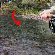 How-to-Spot-and-catch-Trout.-Gear-i-use