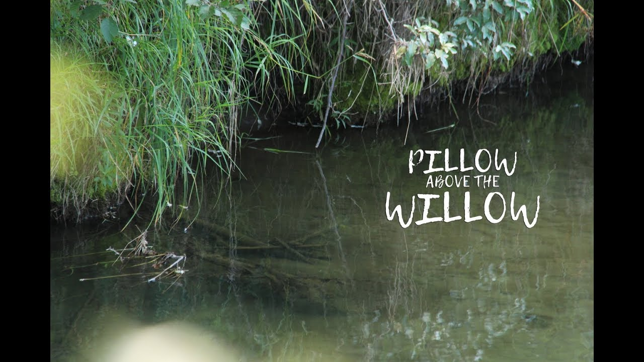 Pillow-Above-Willow