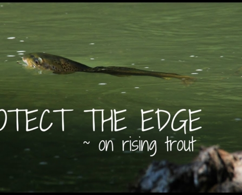 Protect-The-Edge-Rising-Trout