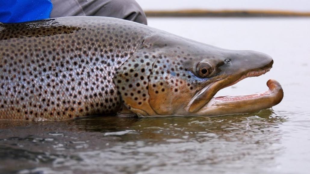 Tierra-del-Fuego-Rio-Grande-Fly-Fishing-by-Todd-Moen