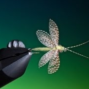 Tying-a-Wally-wing-Fluttering-Caddis-with-Barry-Ord-Clarke