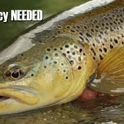 Accuracy-with-Dropper-Nymphs