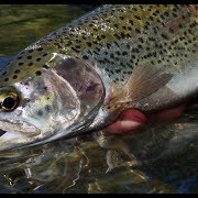 Fly-Fishing-with-Middle-Depth-Droppers