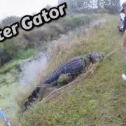 Monster-Gator-Hunt