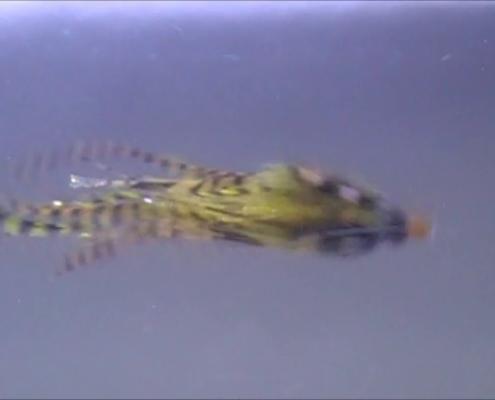 The-Badger-Intruder-Tube-Fly