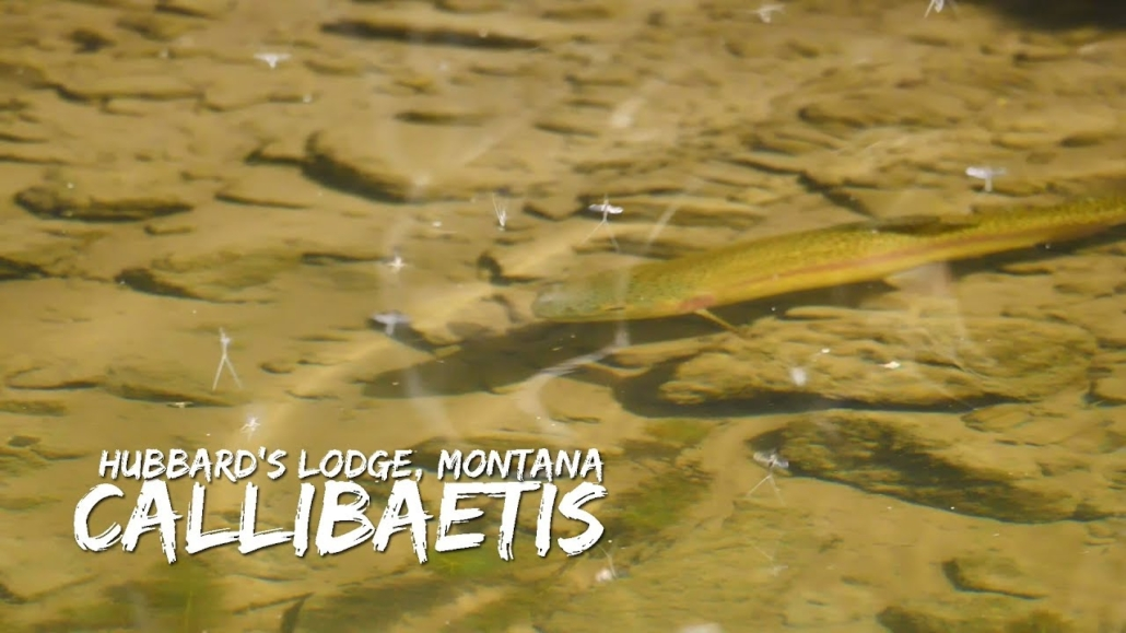 Hubbards-Lodge-Montana-Story-Lake