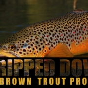Stripped-Down-The-Brown-Trout-Project-IntroTrailer