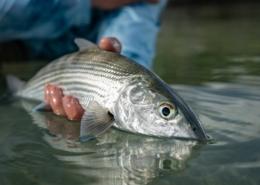 DIY-Bonefishing-Belize-at-Cayo-Frances-Farm-FLY