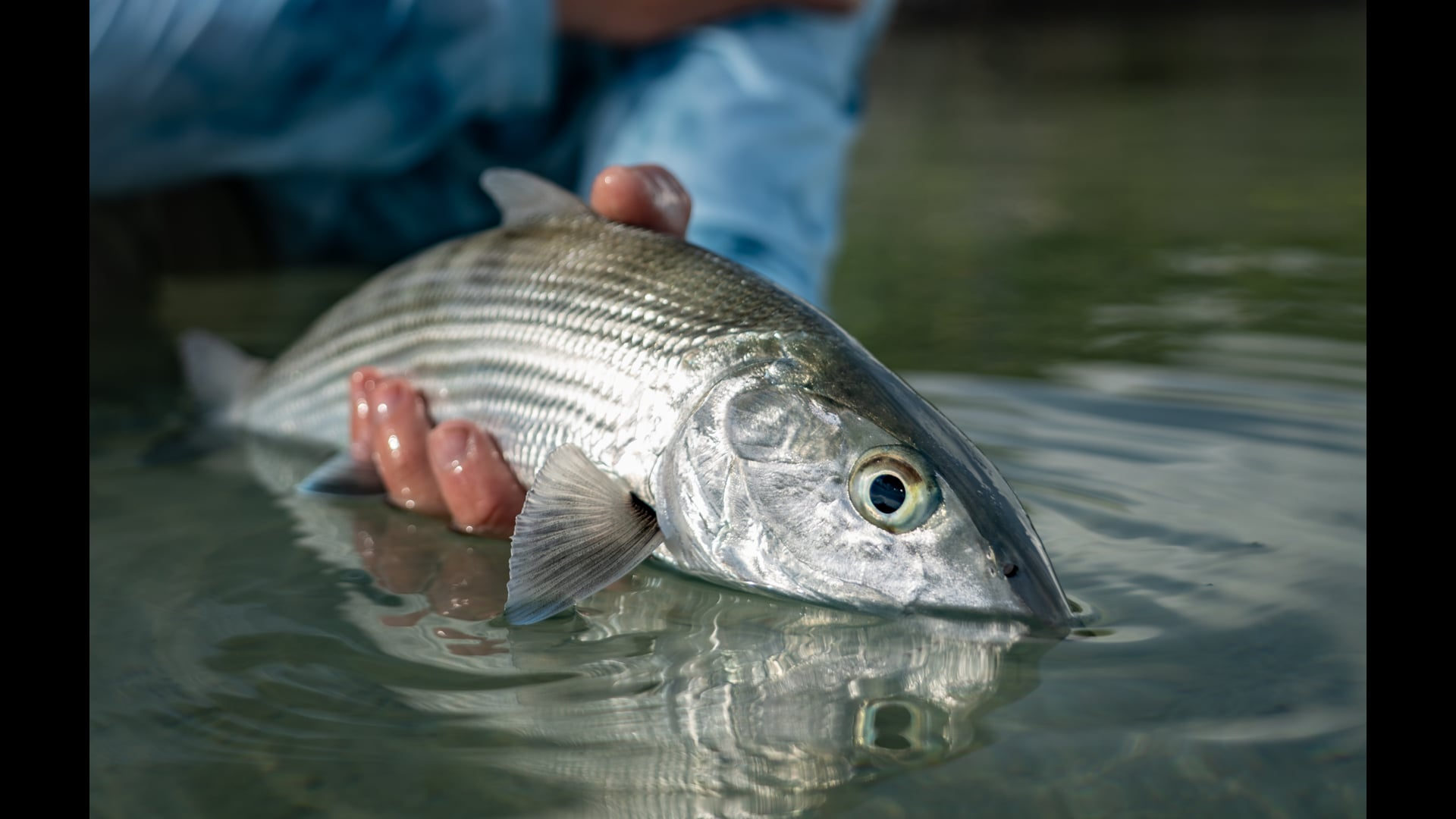 DIY-Bonefishing-Belize-at-Cayo-Frances-Farm-FLY