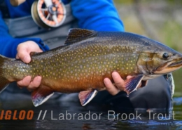Igloo-Fly-Fishing-for-Trophy-Brook-Trout