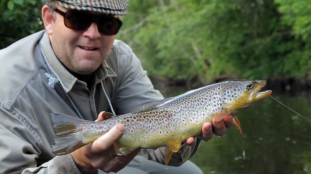 Small-Stream-Big-Trout