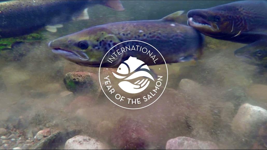 Tweedstart-International-Year-of-the-Salmon-Film