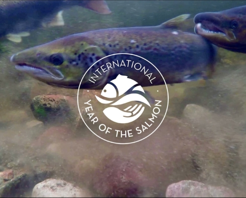 Tweedstart-International-Year-of-the-Salmon-Film