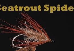 Vi-binder-en-Seatrout-Spider