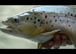Fly-Fishing-Adventure-AUSTRIA